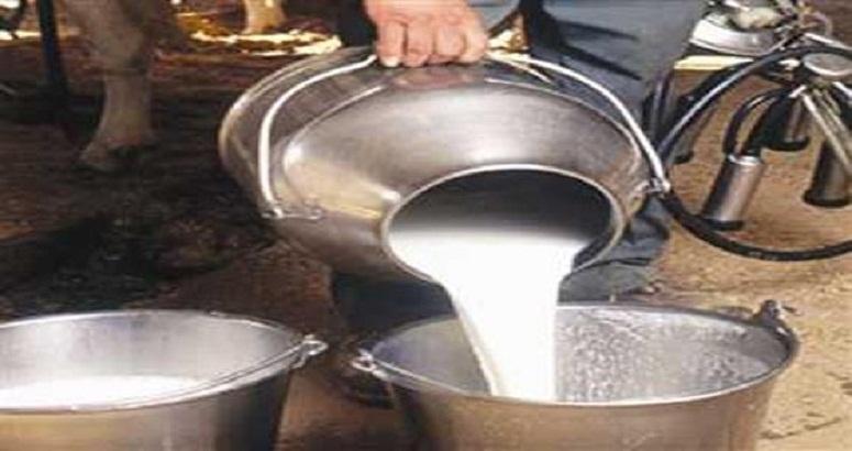 विश्व दुग्ध दिवस : दूध उत्पादन में दुनिया में लहरा रहा है भारत का परचम |  | Dairy Today
